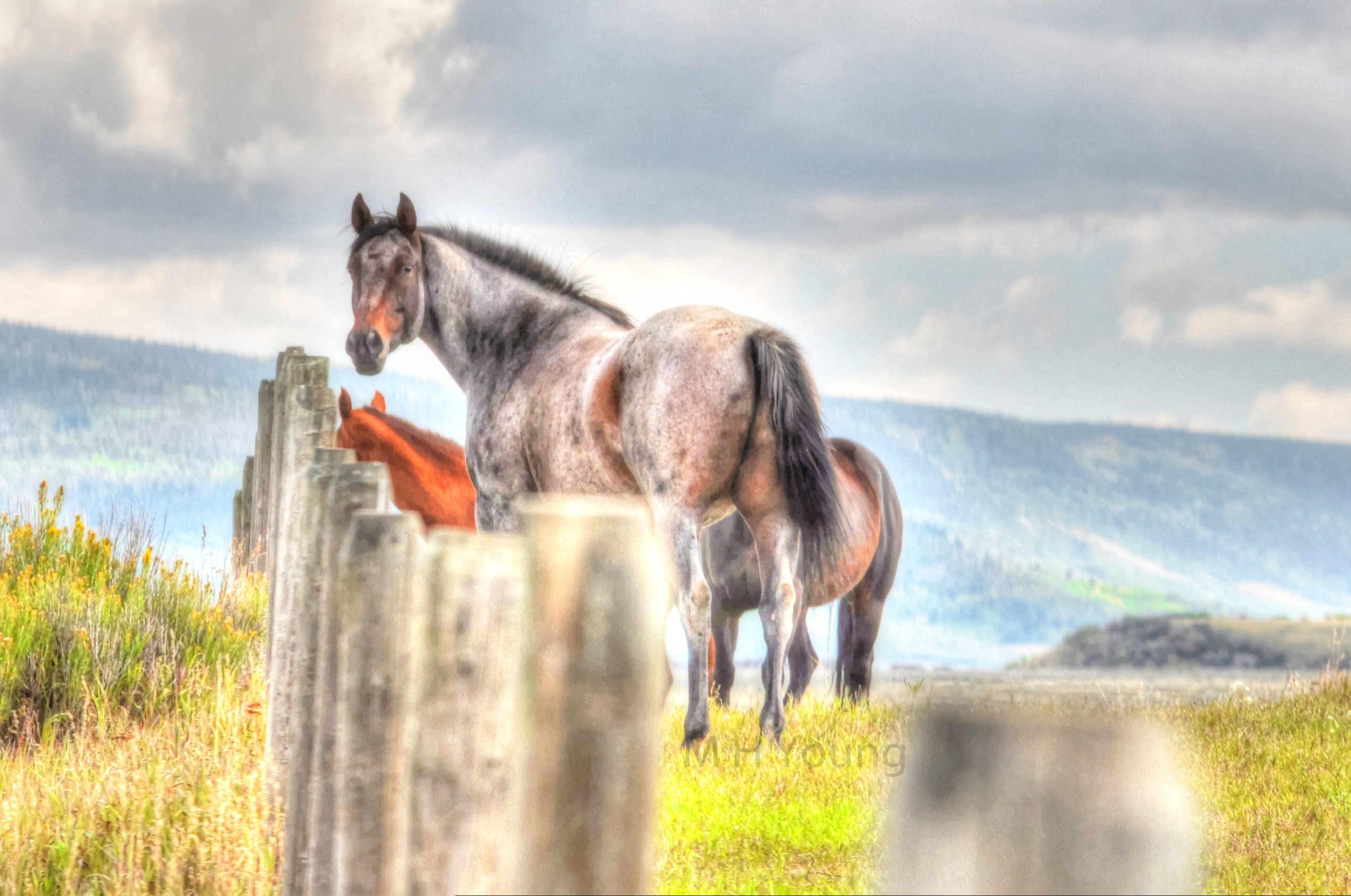 Horses ldi WM.jpg