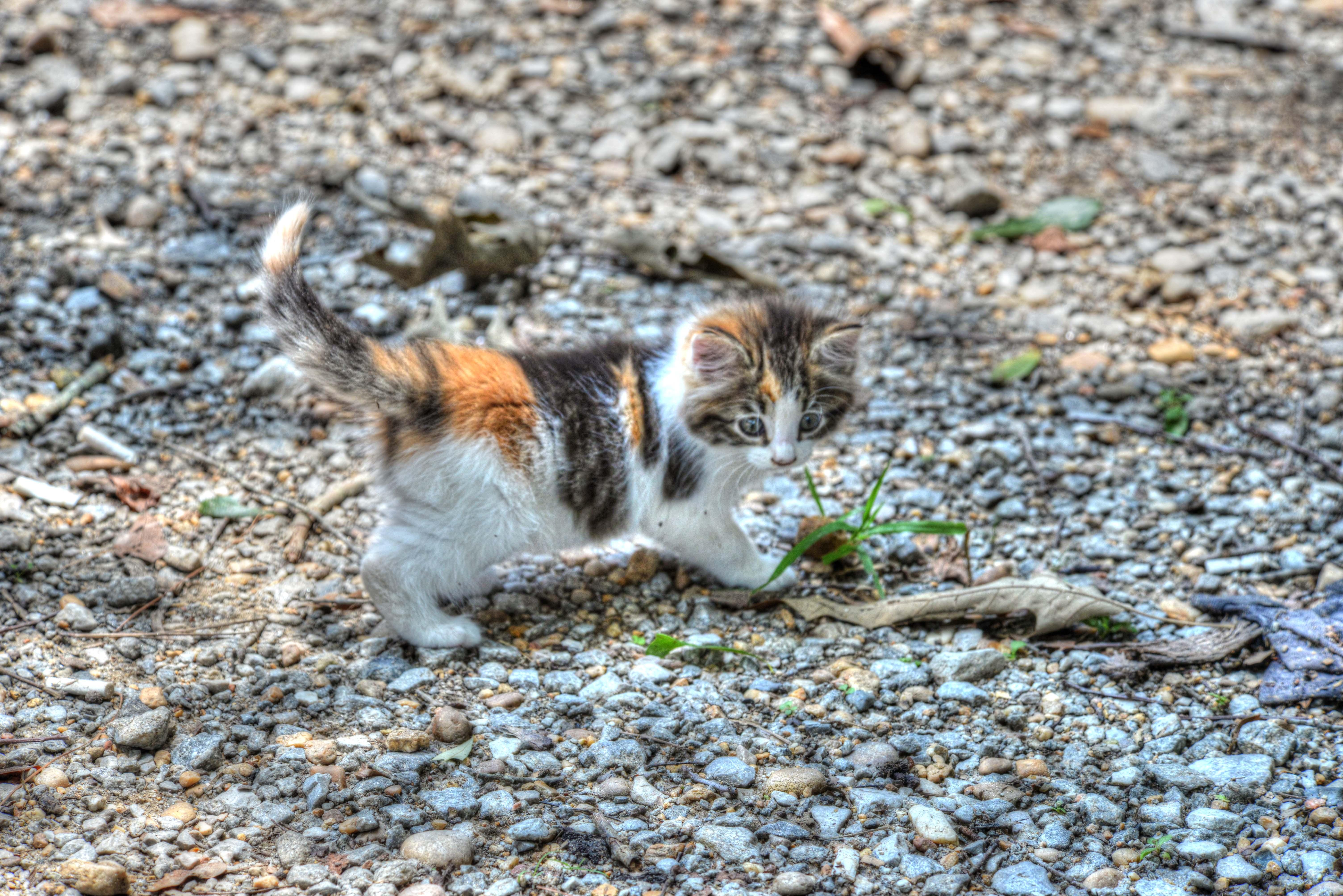Kitten !!!