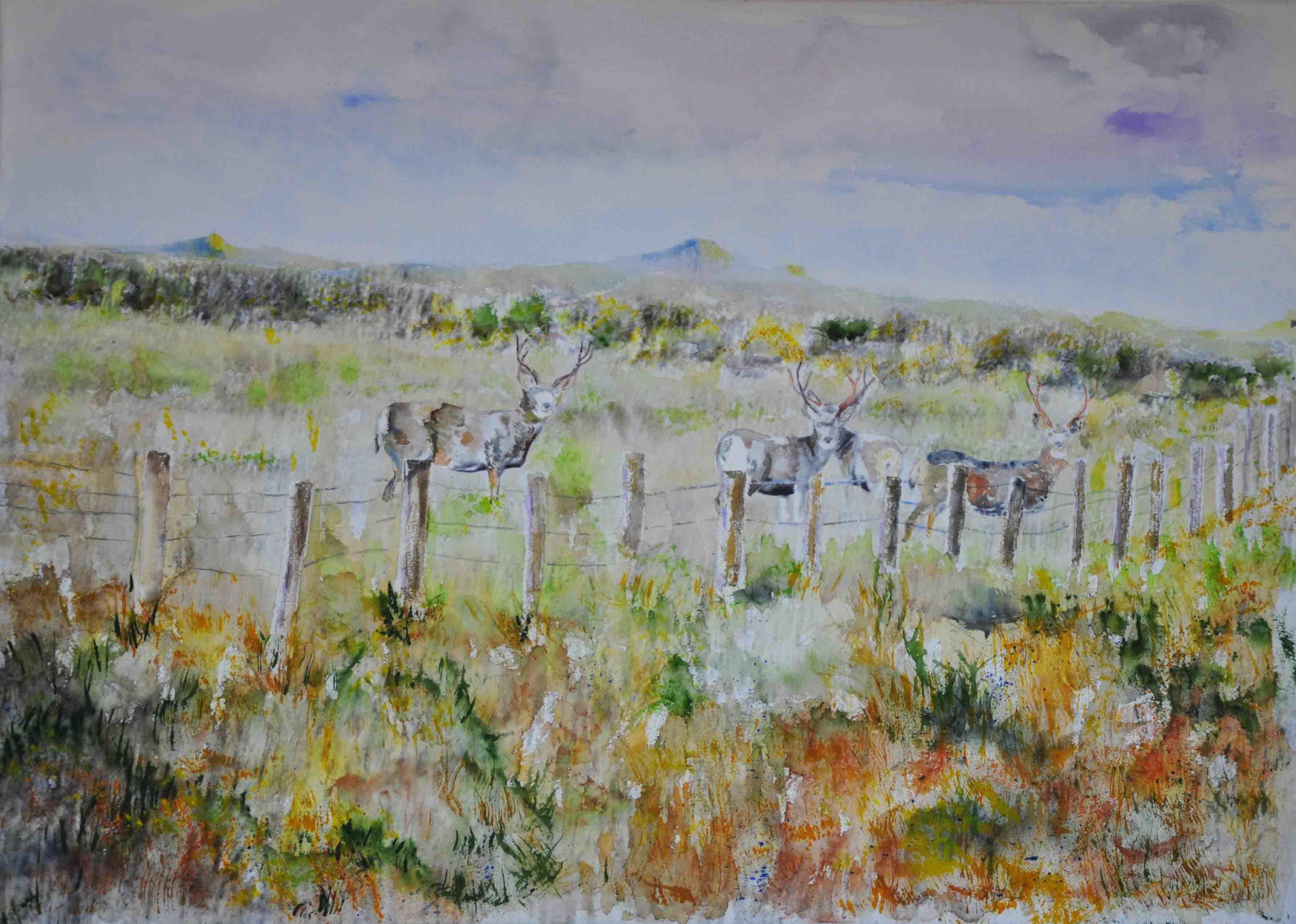 Mule Deer Colorado