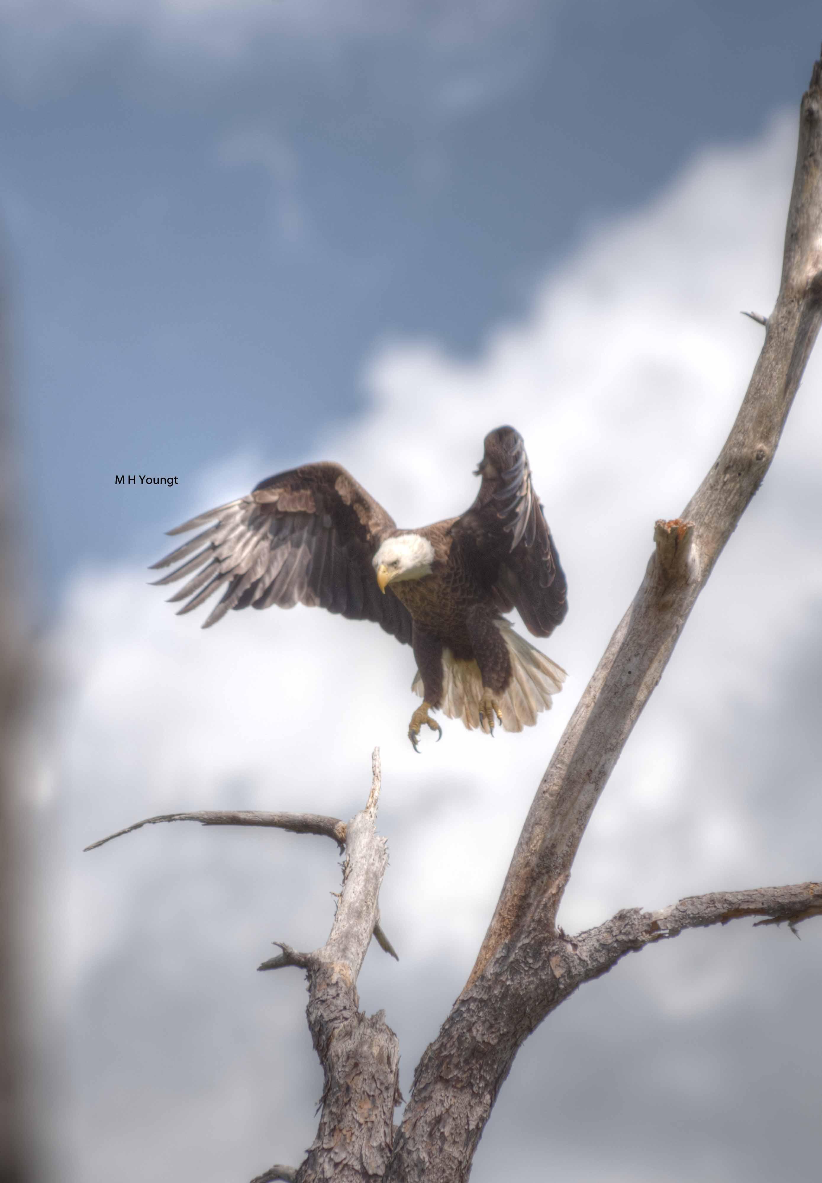 Eagle  # 5  wmlr