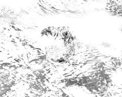 Alligator @ CCF