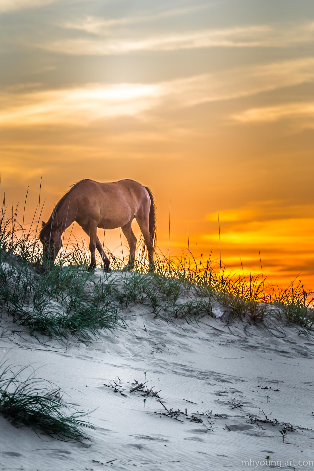 mustangs sunset 11