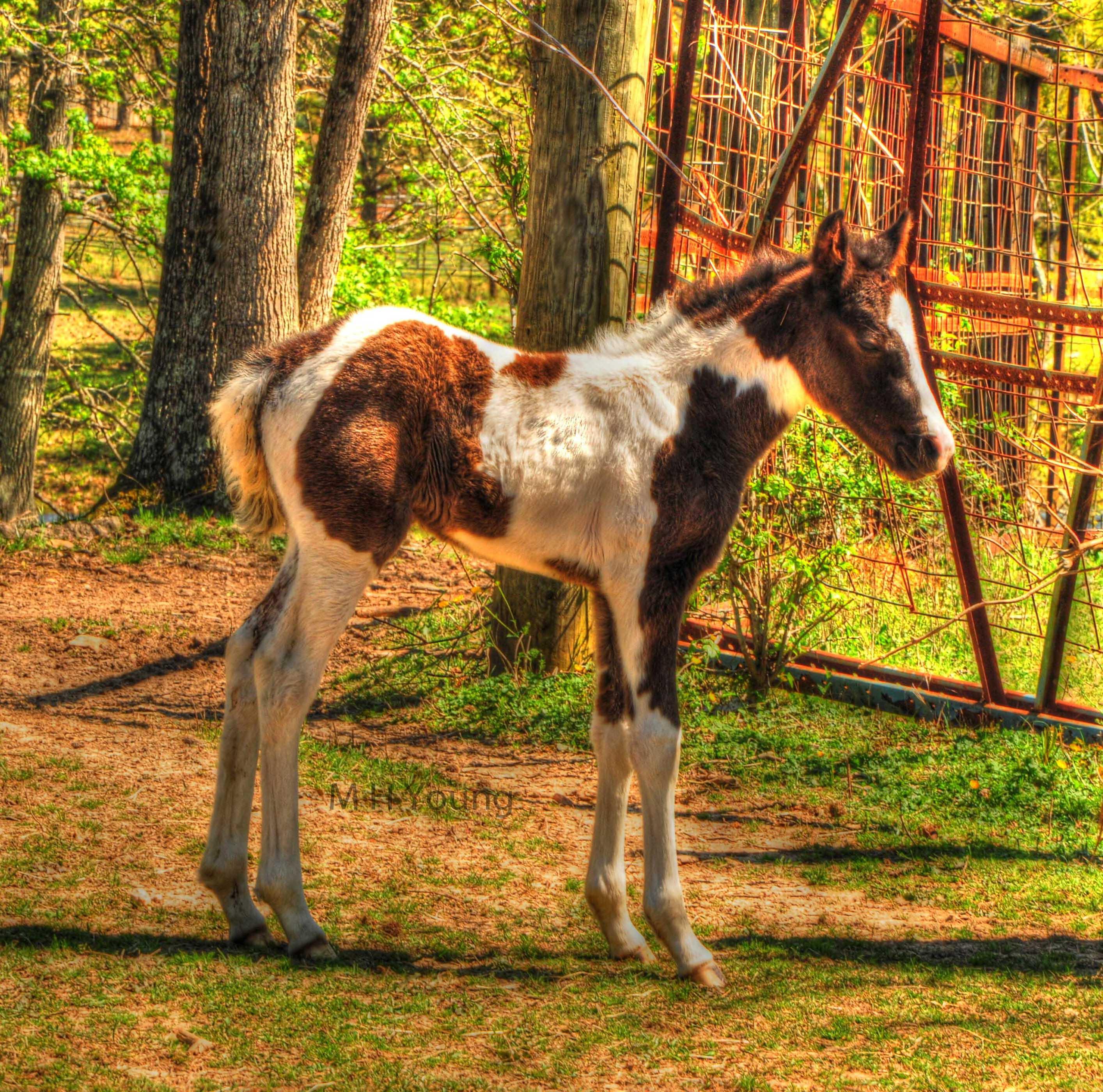 Baby Horse ldi WM.jpg