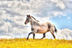 Horses ldi WM 1.jpg