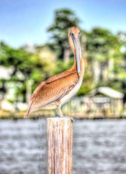 Pelican LDI WM.jpg