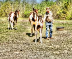 Horses and baby ldi WM.jpg