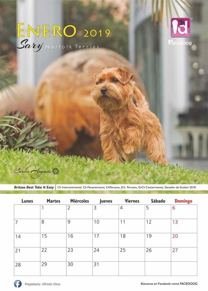 Kalender-Model 2019
