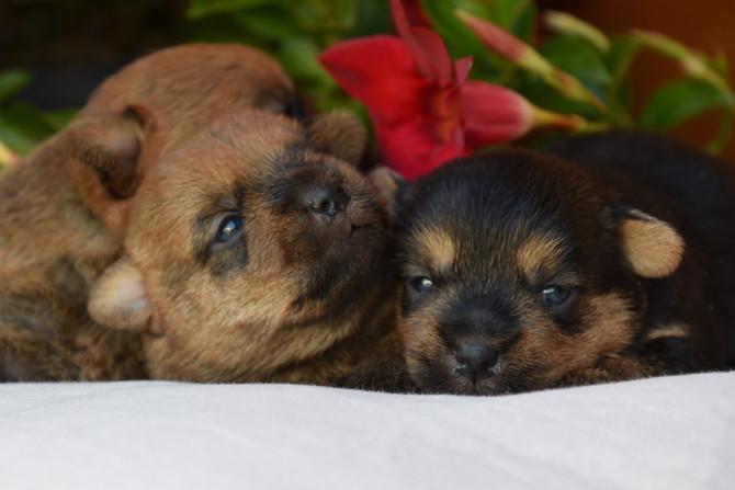 Hundekinder 2 Wochen alt