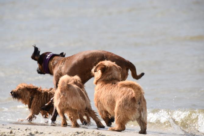 Baltic Terrier Show vom KfT
