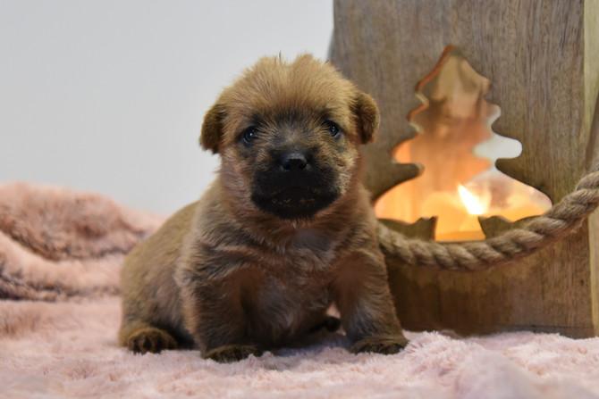 Hundekinder 26 Tage alt, mit Welpenbrei-Näschen(BB Sunnyboy x Ch BB Violetta)