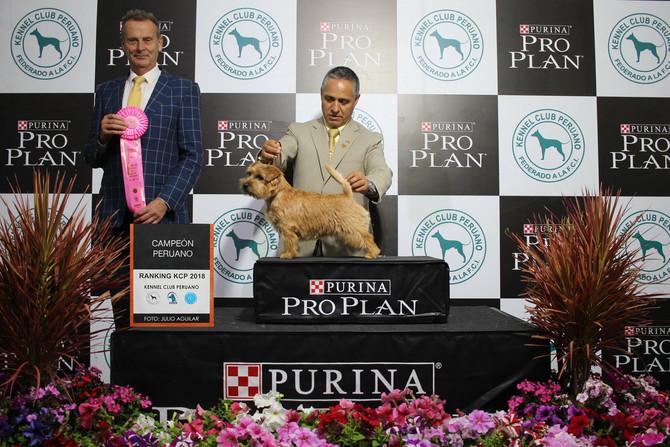 Neuer Champion in Peru!!
