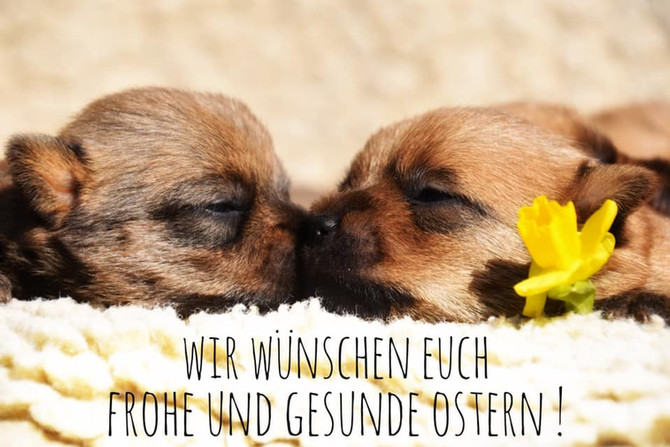 Frohe Ostern 2020!