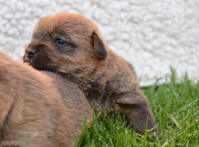 Hundekinder 3 Wochen alt