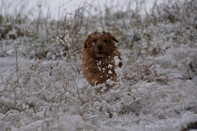 Es schneit, es schneit, kommt alle aus dem Haus...