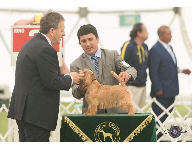 Und es gab wieder neue Bilder aus Peru...