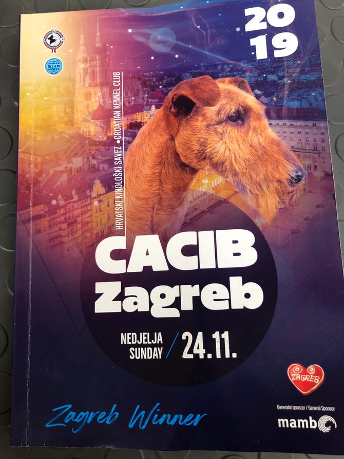 Zagreb Winter Classics/CACIB Show 2. Tag