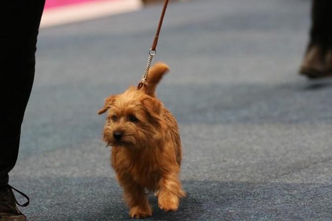 World Dog Show in Leipzig...