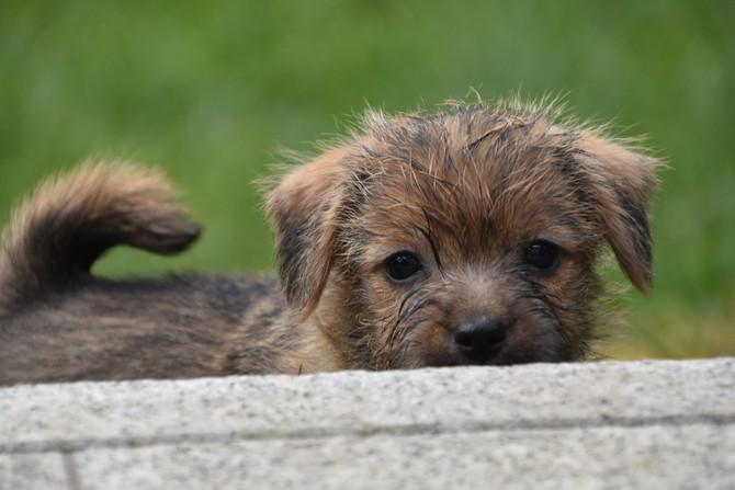 Hundekinder 6 1/2 Wochen alt