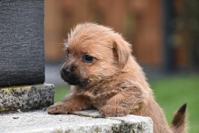 Hundekinder 5 1/2 Wochen alt