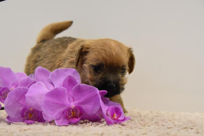 Hundekinder 5 Wochen alt
