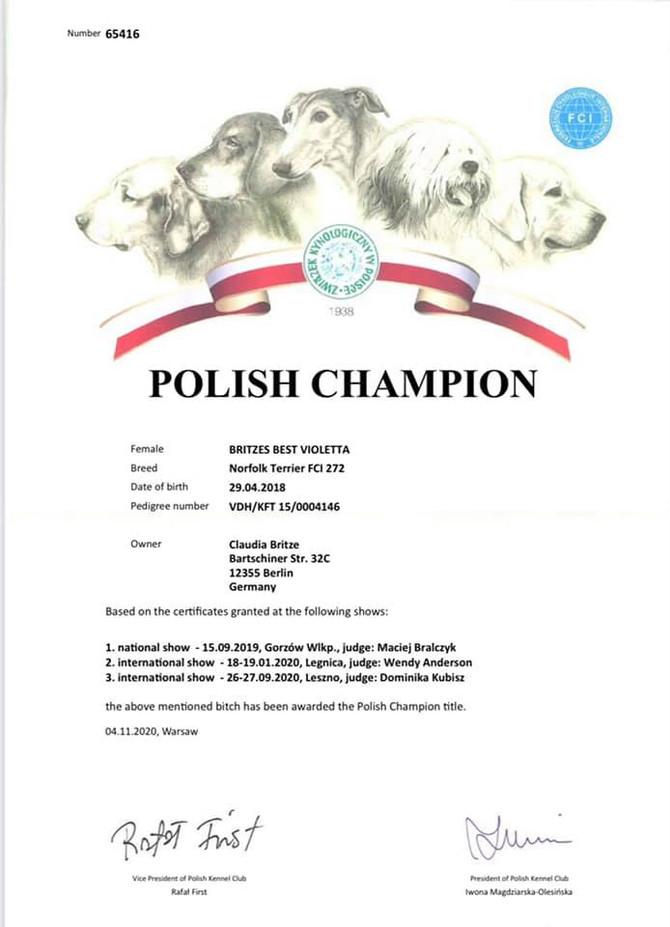 Champion Polen für Vio