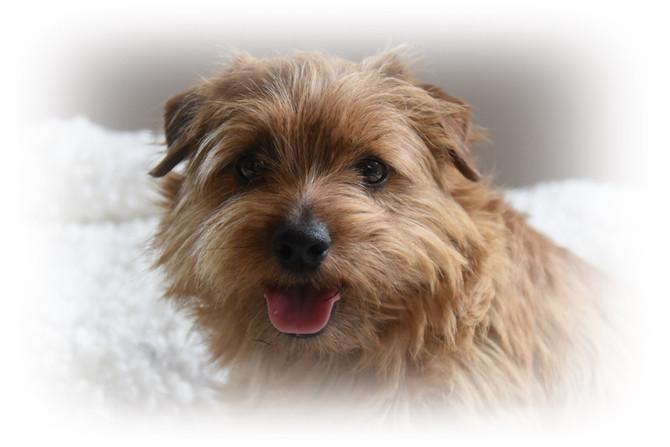 Hundekinder, 9. Lebenstag