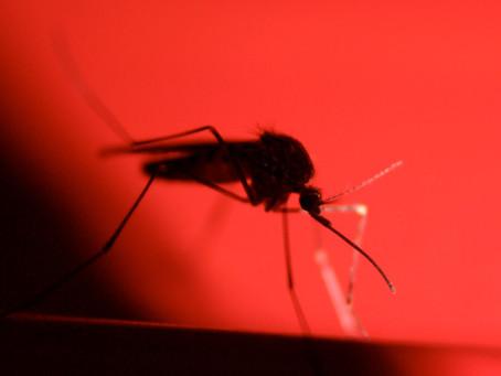 How Common Is Malaria?