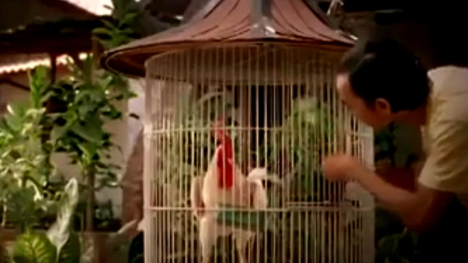 PSA - Flu Burung Periksakan (Indonesia)