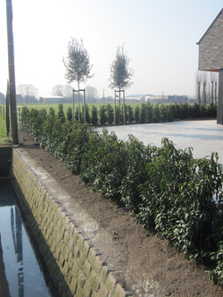 strakke groene tuin