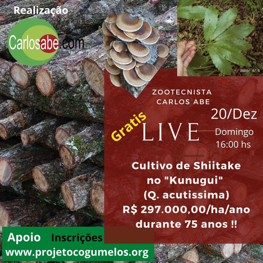 Live cultivo de Shiitake no Kunugui