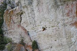Gorges du Tarn, Griffon vultures, walking