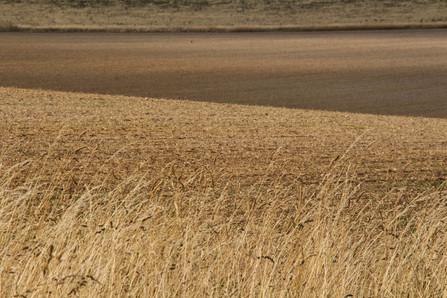 Field patterns, light and shade, Buckinghamshire