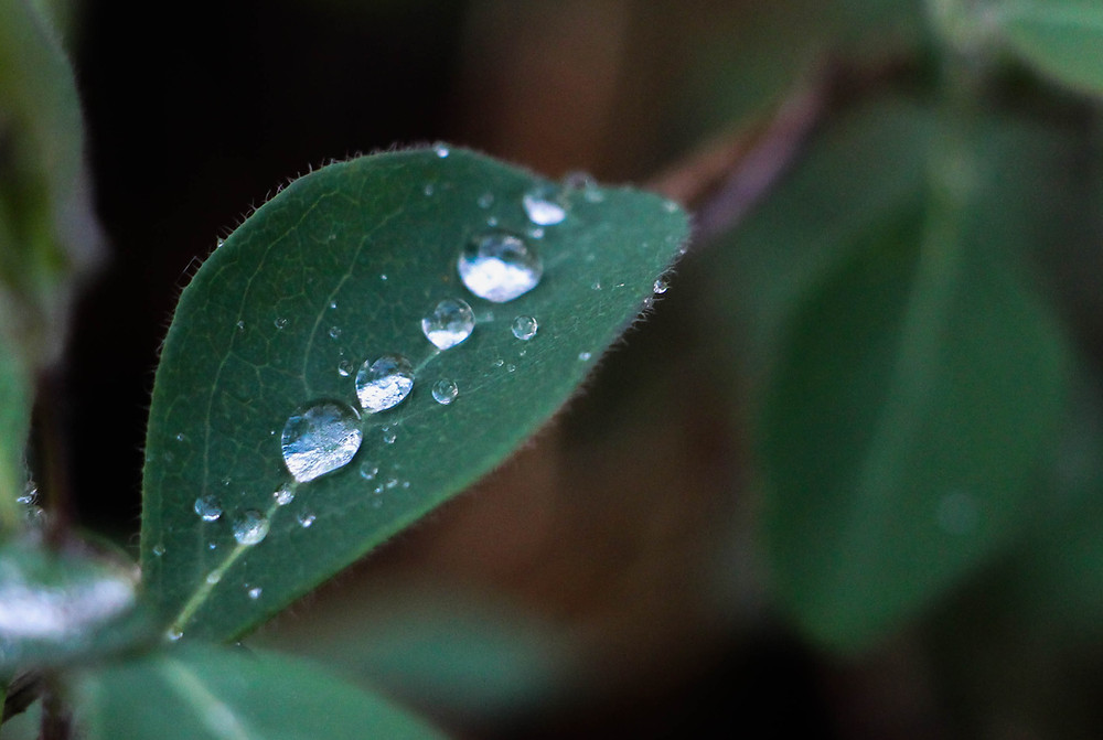 Droplets of rain on a leaf