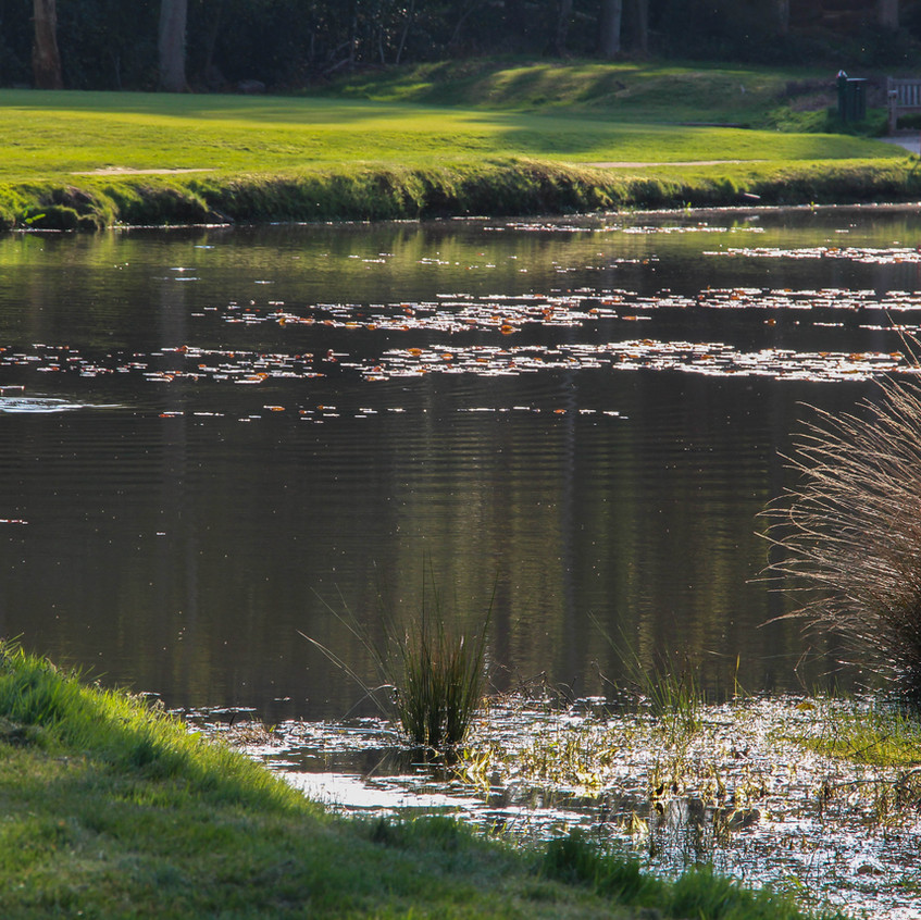 Woking Golf Course pond