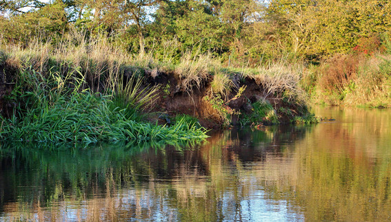 Triggs Backwater