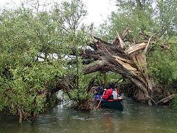 River Thames, Cricklade, tree blockage