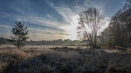 Whitmoor Common, frost, early morning