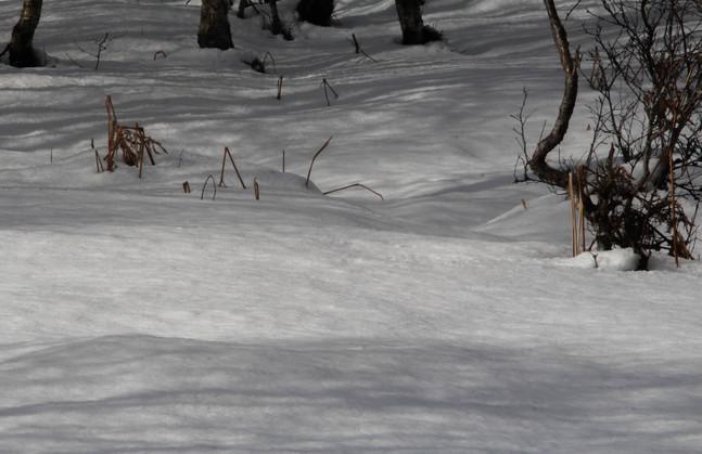 Woodland winter wonderland