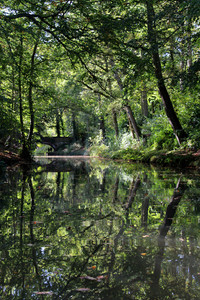Tranquillity in the woods