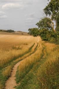 Tracks across the fields, near Ivinghoe Beacon