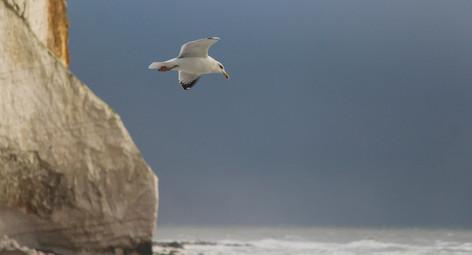 Gliding, Seaford Head