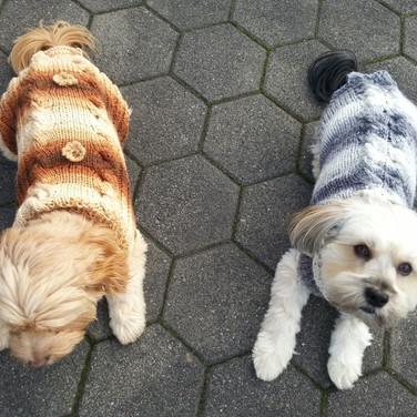 Hundepullover gestrickt mit Zopf