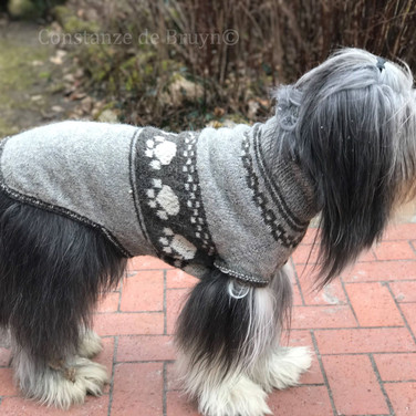 Constanzes Hundepullover Raglan