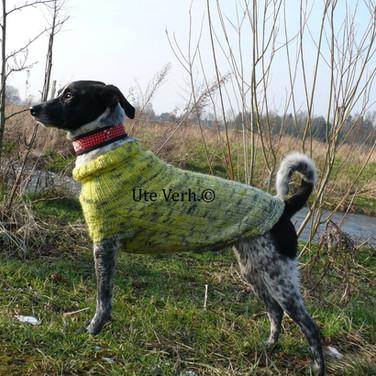 Hundepullover Raglan von Ute gestrickt
