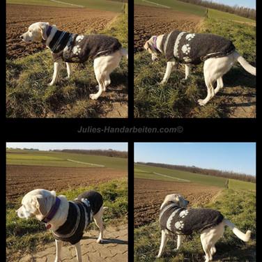 Hundepullover Raglan Bergwolle