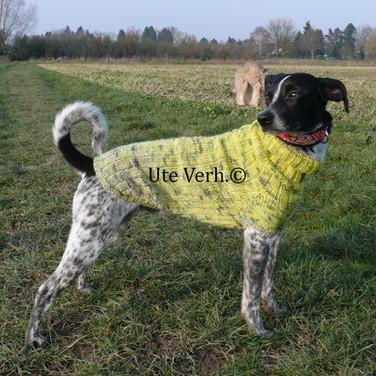 Hundepullover Raglan Ute