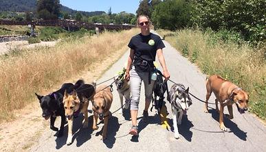 Santa Cruz Dog Walking Adventures