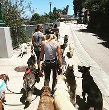Santa Cruz Dog Boarding