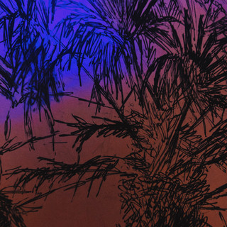 14. Palm