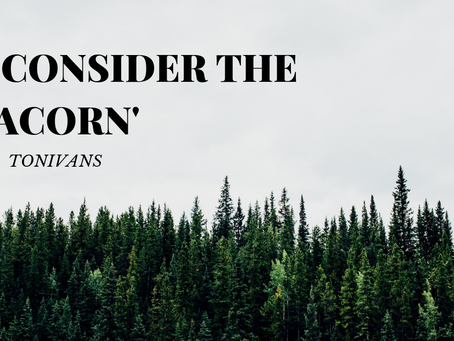 For Network Marketers, 'Consider the Acorn'
